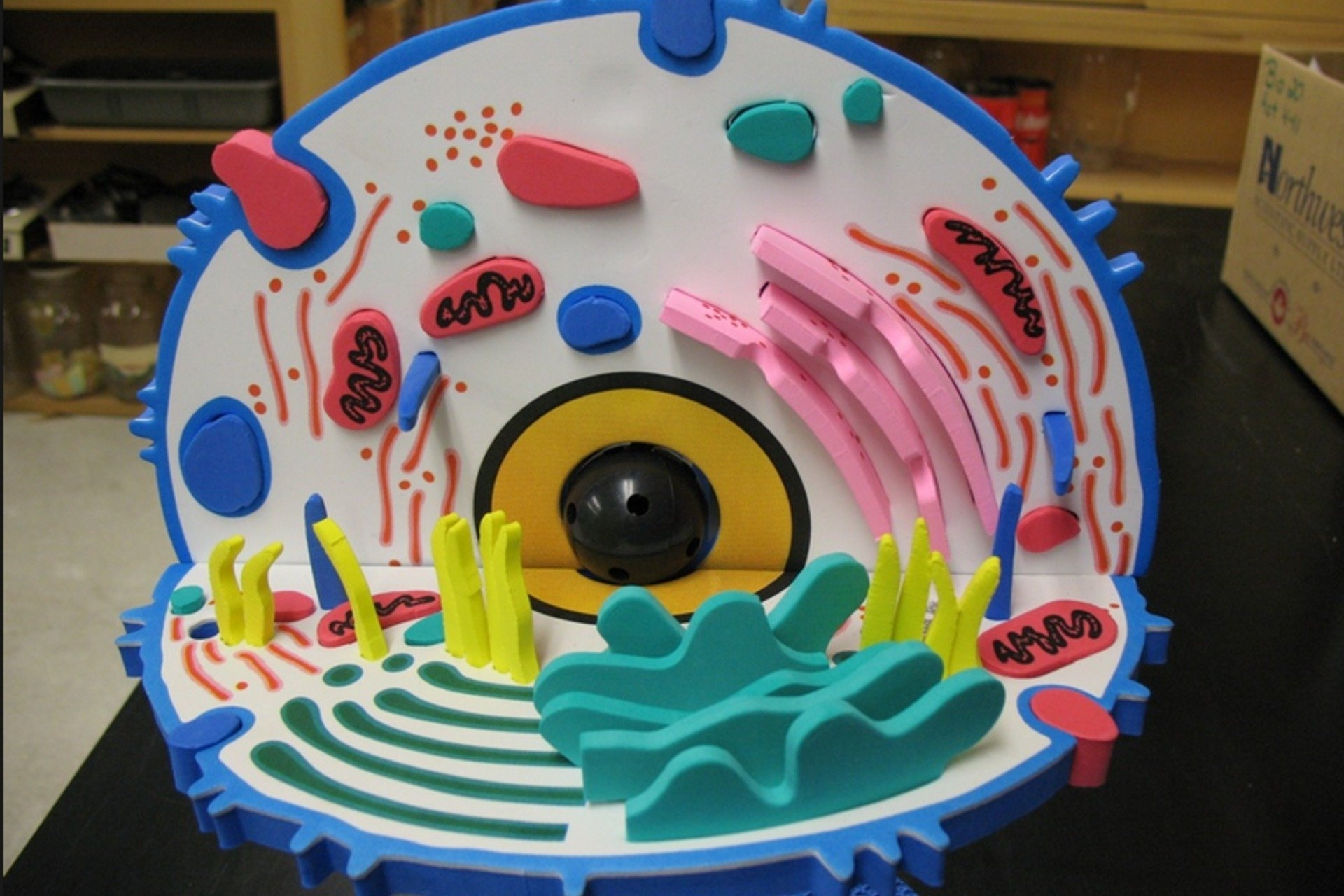 10 Most Recommended 3D Animal Cell Model Ideas make a 3d model cell diy