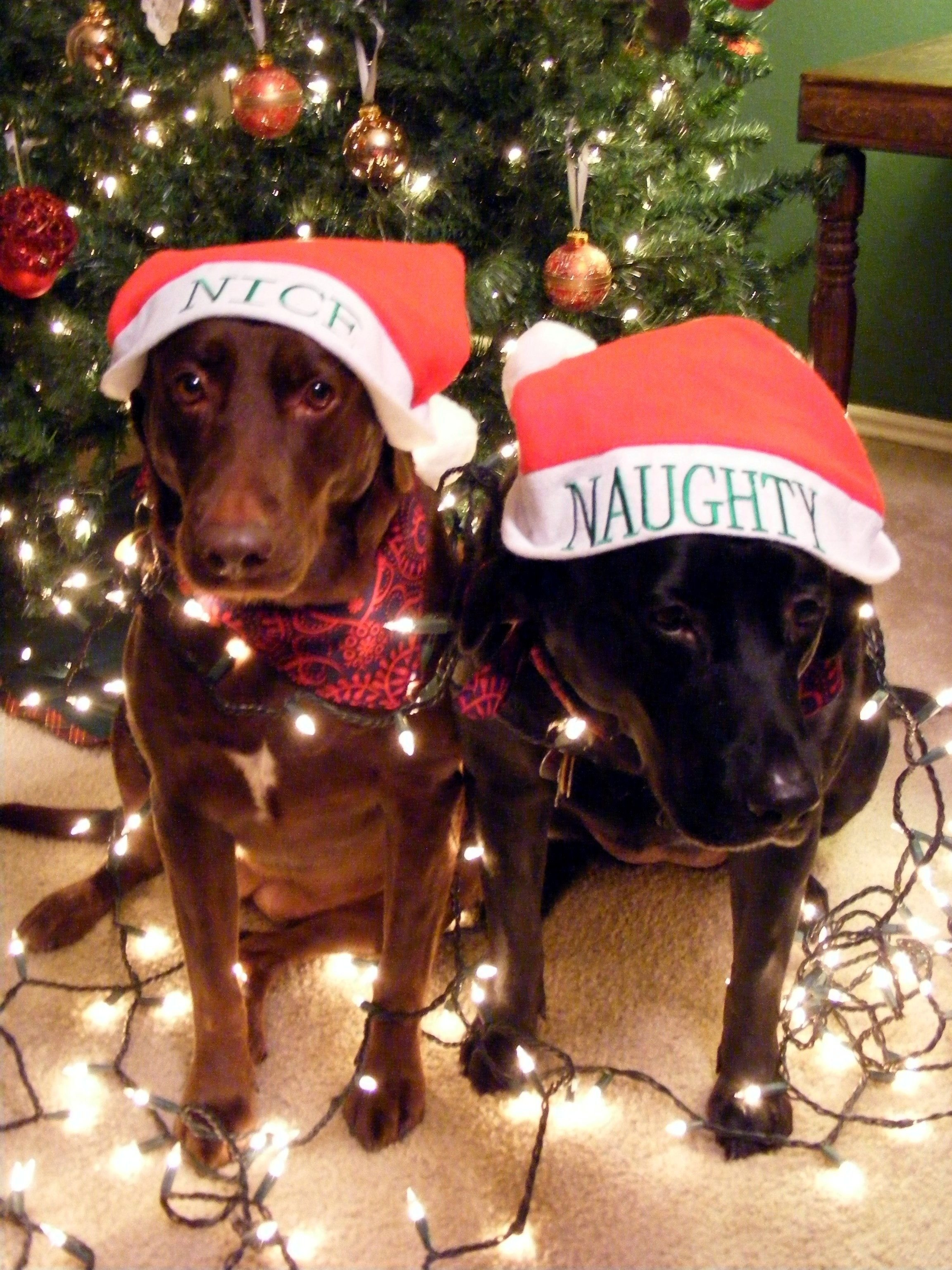 10 Attractive Christmas Card Ideas With Dogs my dog bella chloe for our christmas lights card idea 2010 my 2021