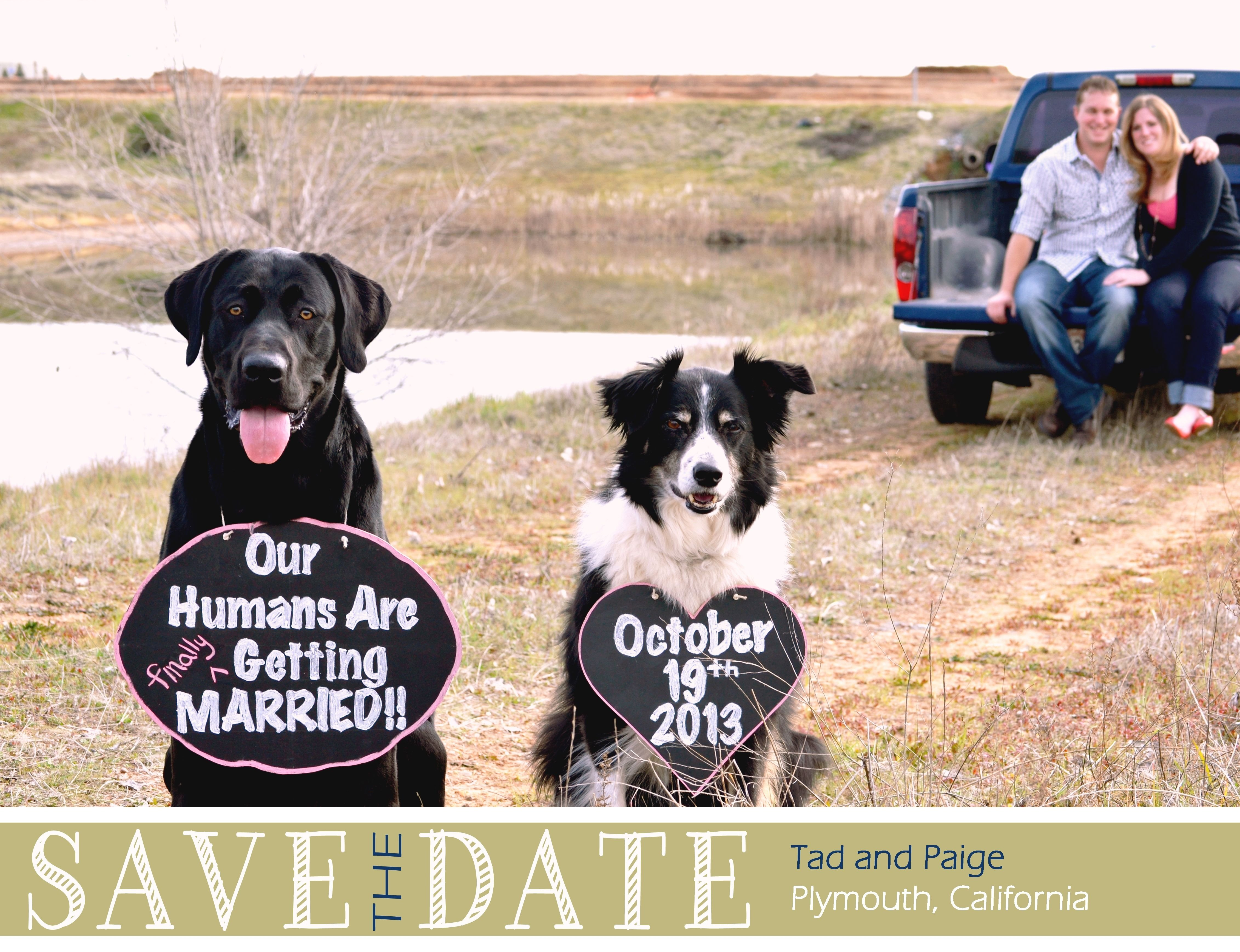 10 Nice Save The Date Ideas With Dogs our diy save the date for wedding in october weddings rustic diy 2020