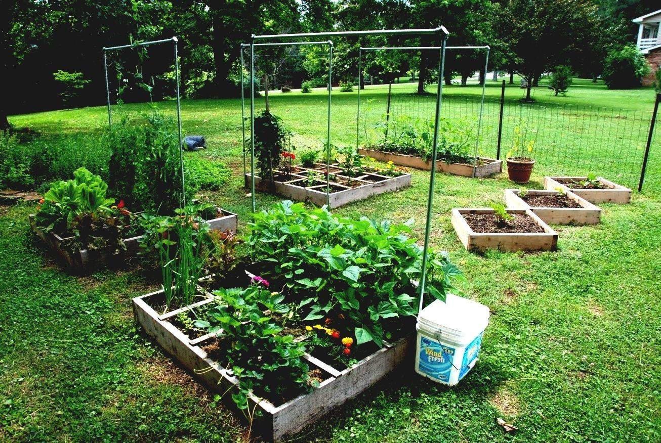 10 Trendy Small Backyard Vegetable Garden Ideas outdoor and patio small backyard vegetable garden ideas in square 2020