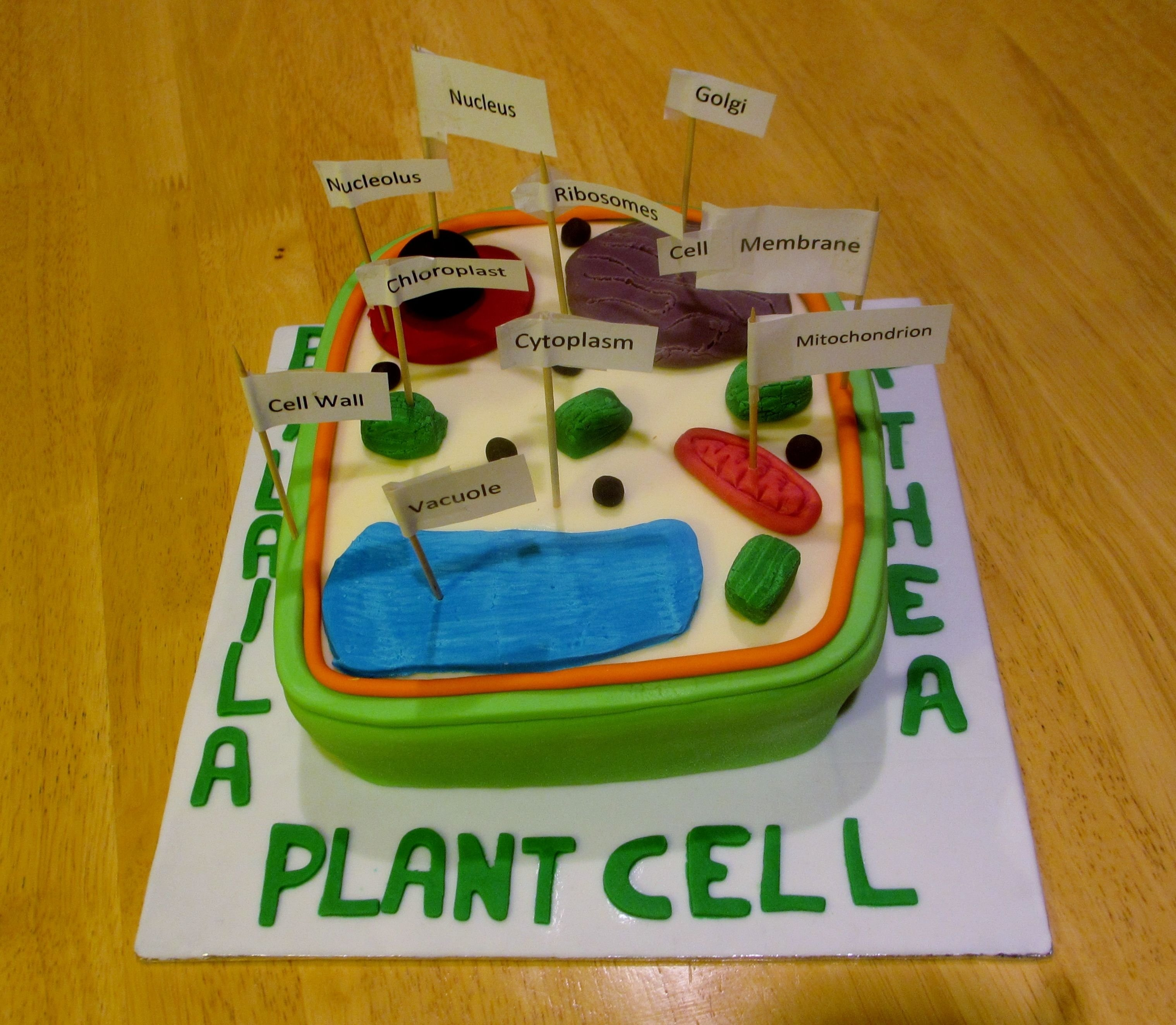 plant cell. biology homework. | diy & crafts that i love | pinterest