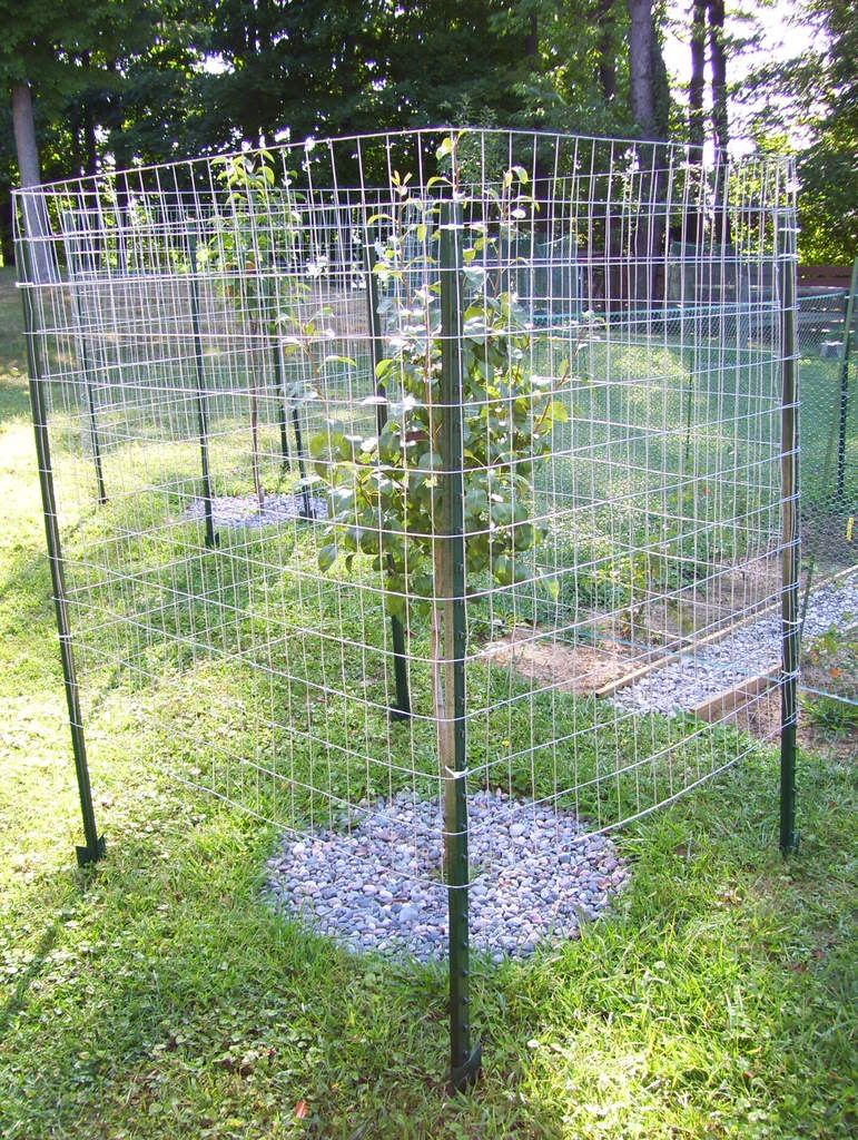10 Fantastic Garden Fence Ideas To Keep Deer Out raised garden fence ideas to keep deer out yard deer garden