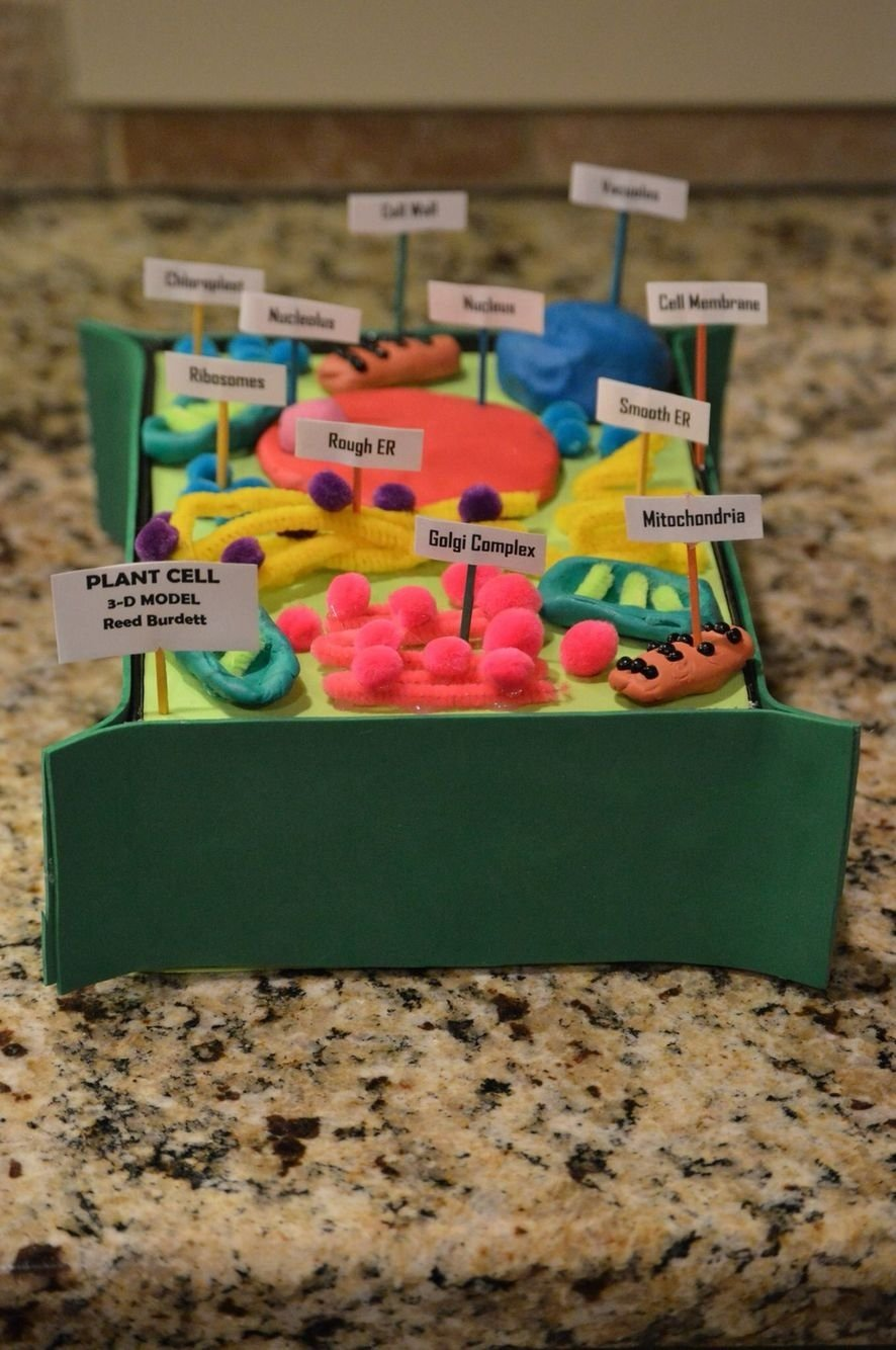 10 Pretty 3D Plant Cell Model Project Ideas reeds 7th grade advanced science plant cell project 3 d reeds 2 2020