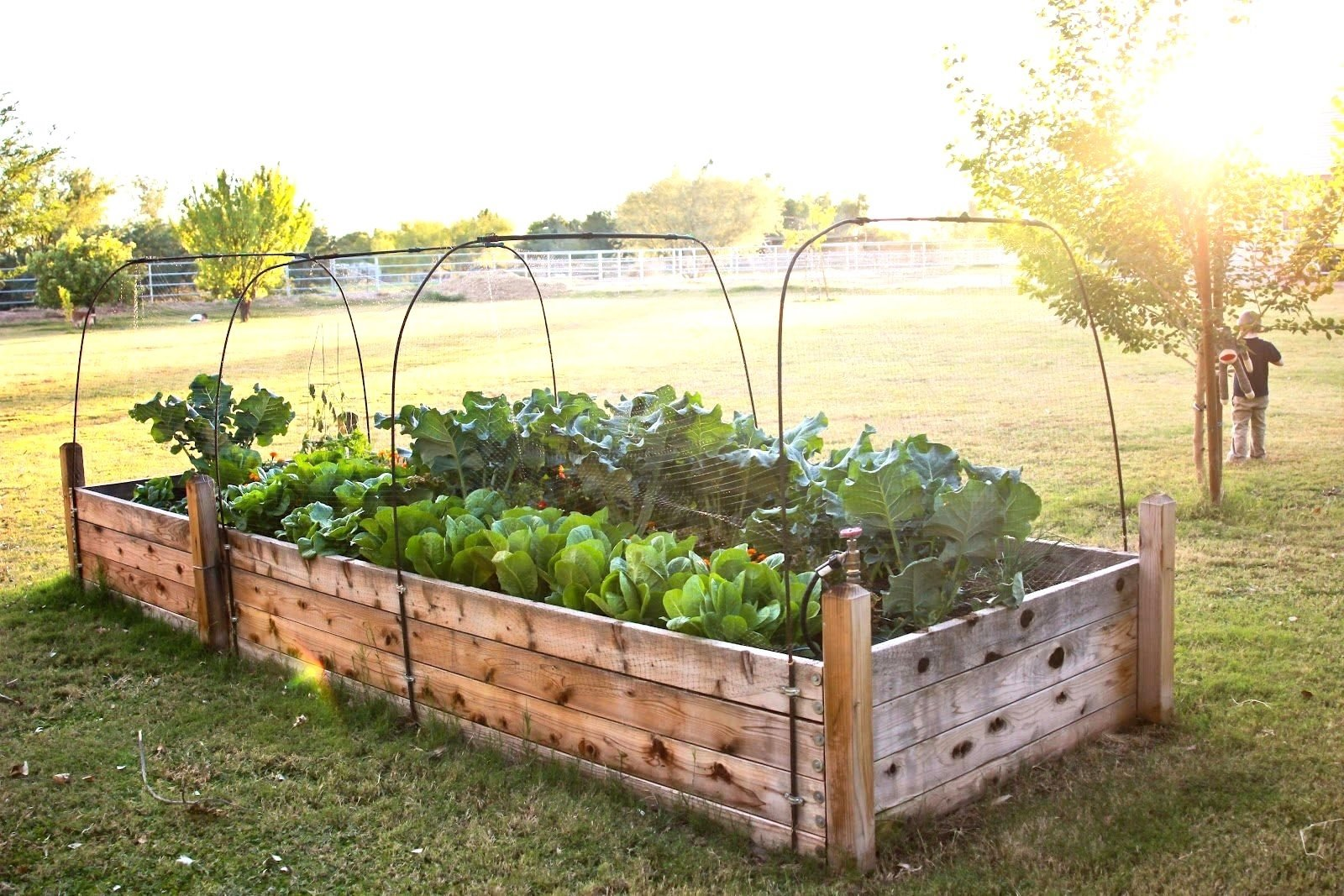 samples of raised bed garden layout ideas | the garden inspirations