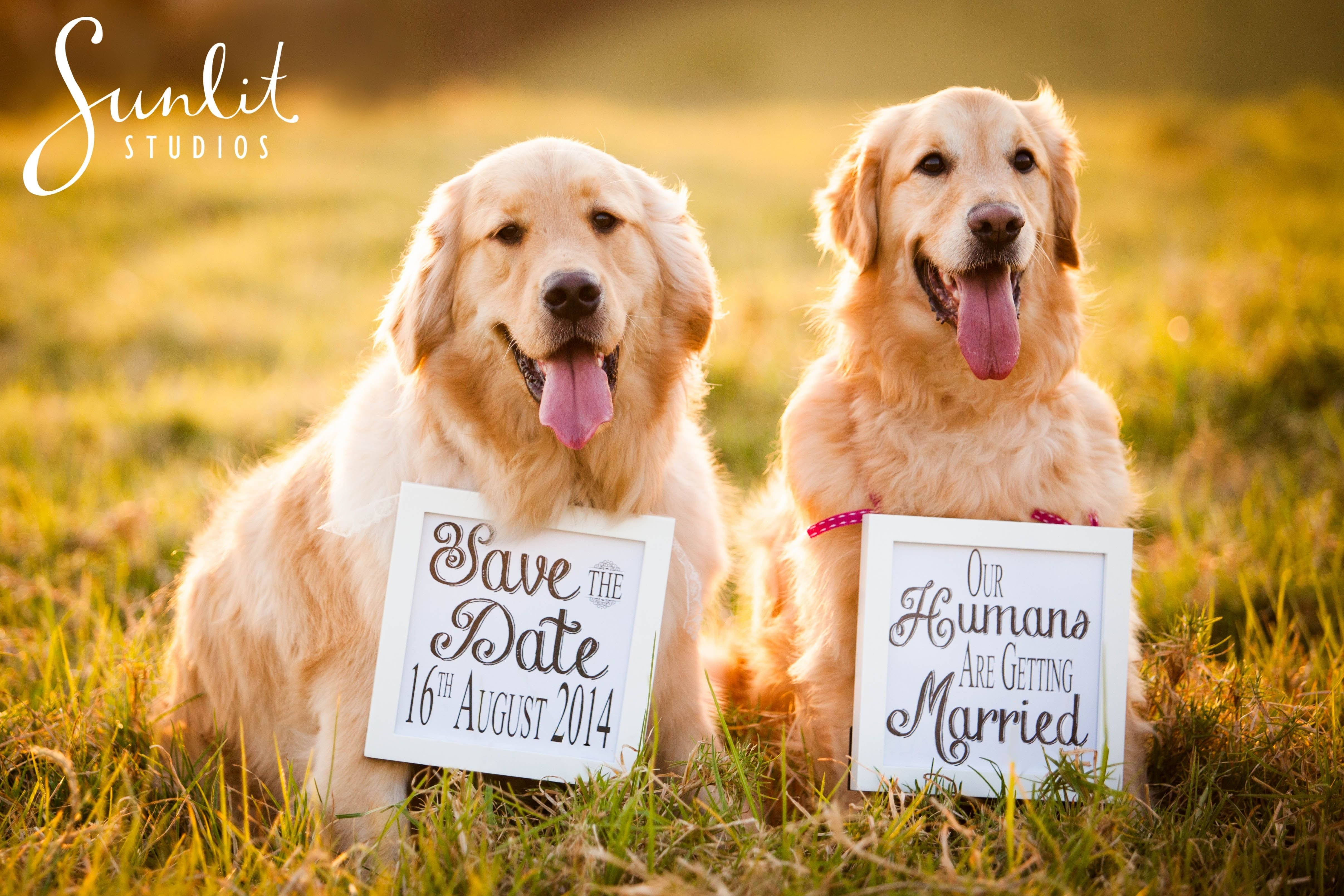 10 Nice Save The Date Ideas With Dogs save the date idea with dogs engagement photography ideas see the 2020