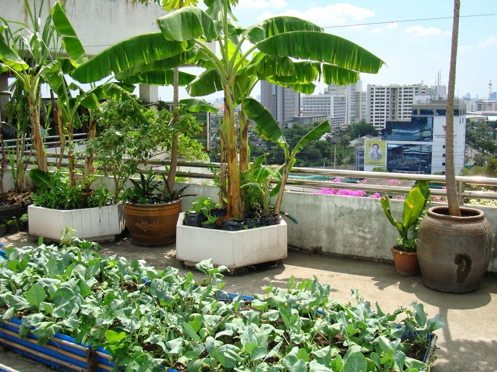 10 Pretty Vegetable Garden Ideas For Small Spaces small patio vegetable garden ideas incredible dimensions ve able 2020
