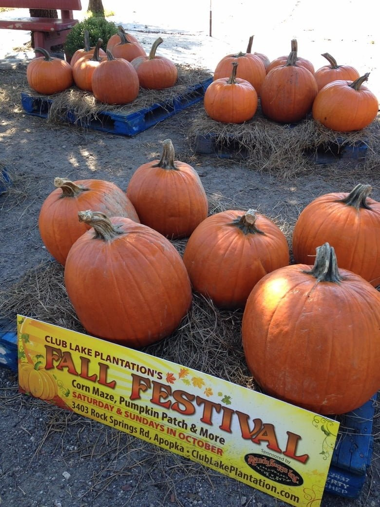 10 Unique Fall Festival Ideas For Church the 10 best fall festivals for central florida families care