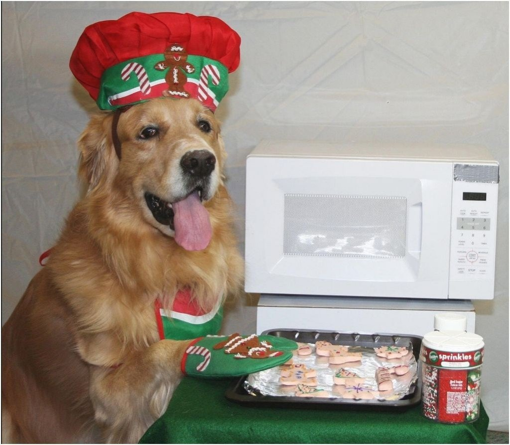10 Attractive Christmas Card Ideas With Dogs the 50 best dog holiday card ideas fidose of reality 3 2021