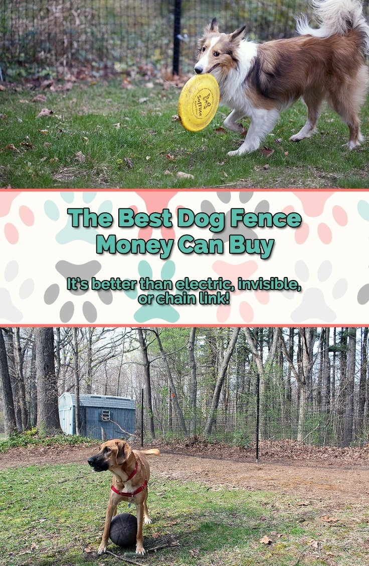 10 Fashionable Senior Project Ideas With Animals the best dog fence on the market superior low cost 2020