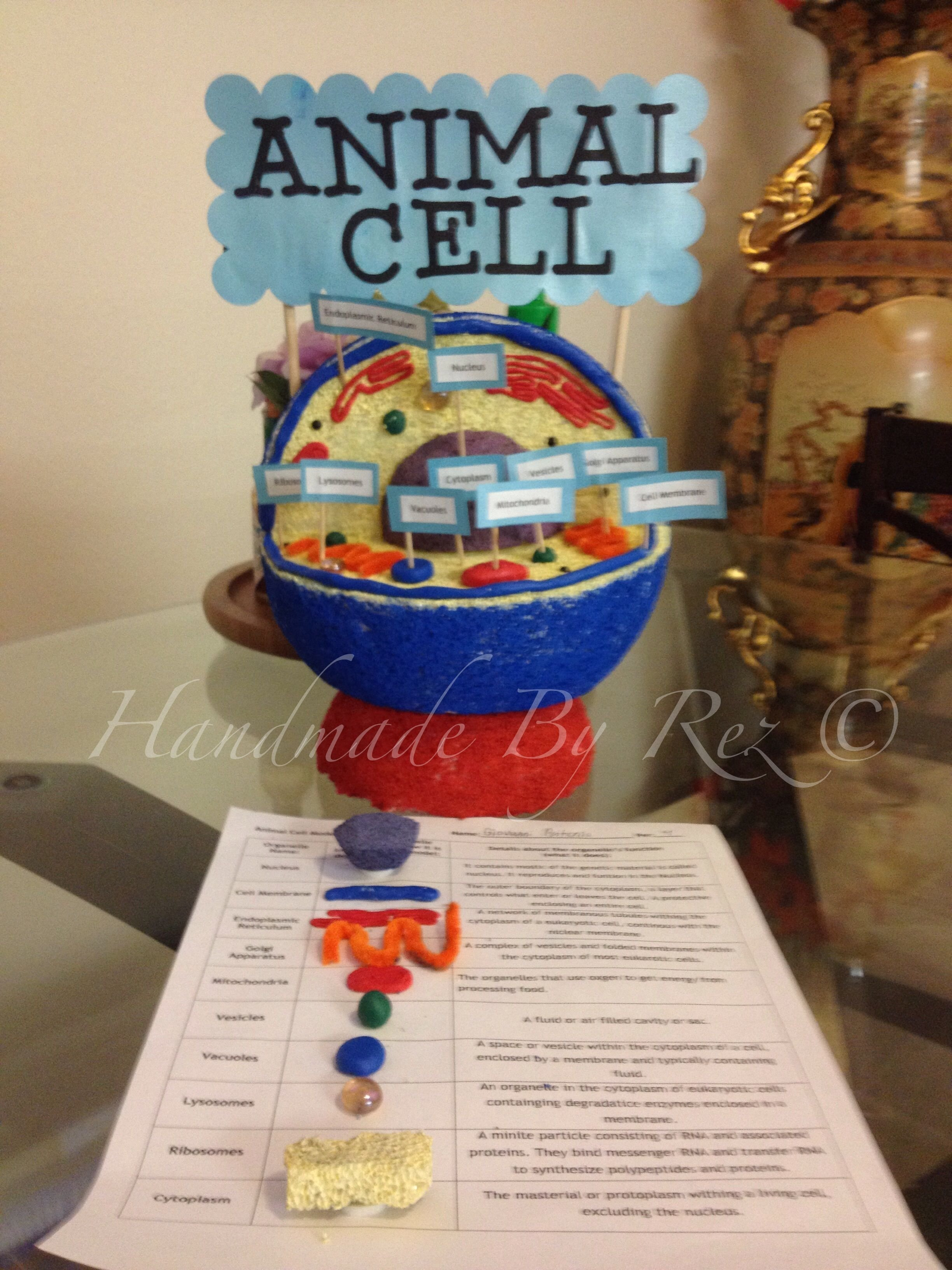 10 Unique 3D Animal Cell Project Ideas this is a good example for animal cell project science project 1