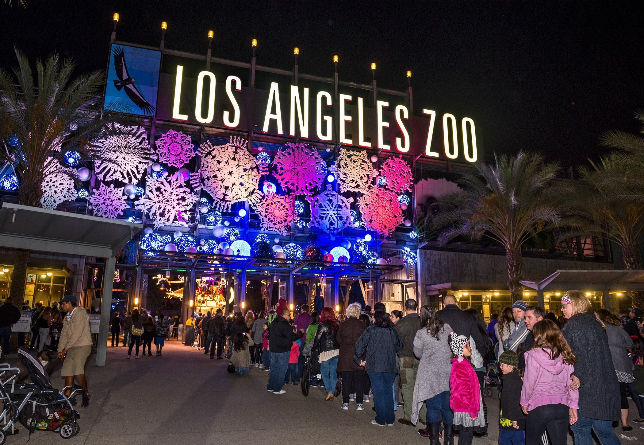upcoming events | la zoo lights: family new year's eve | la jaja