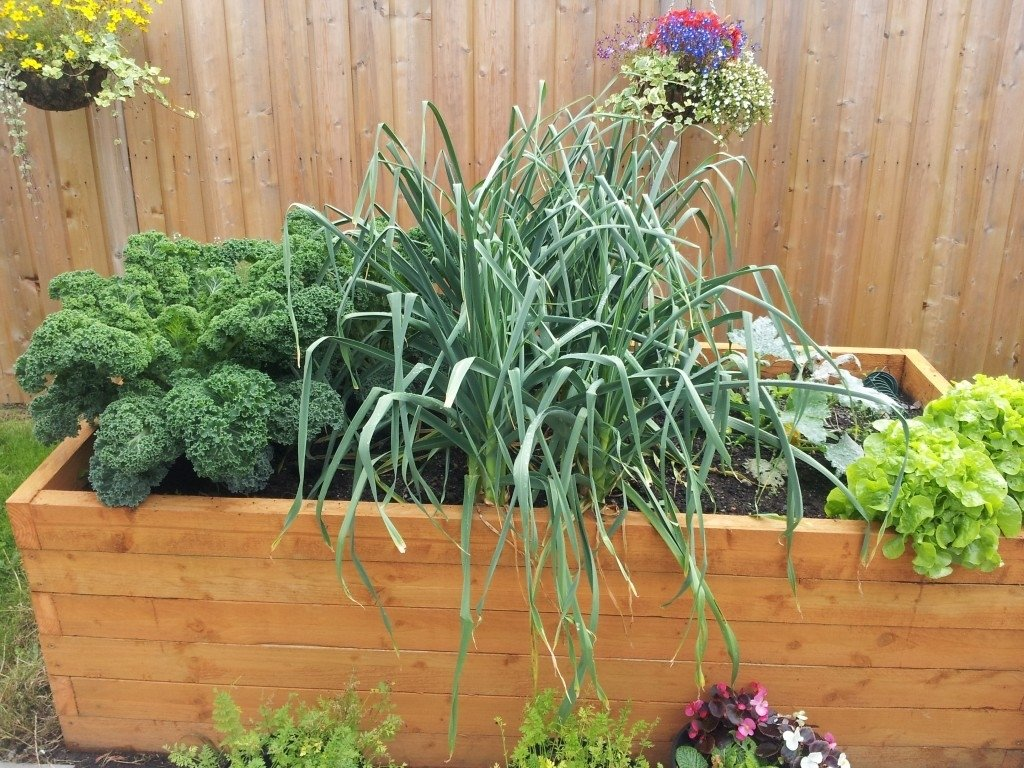 10 Pretty Vegetable Garden Ideas For Small Spaces vegetables to grow in a small gardengreenside up 2020