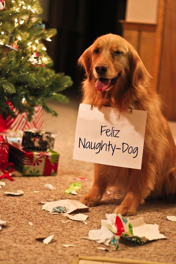10 Attractive Christmas Card Ideas With Dogs well it happens feliz naughty dog funny dogs doglovers 2021