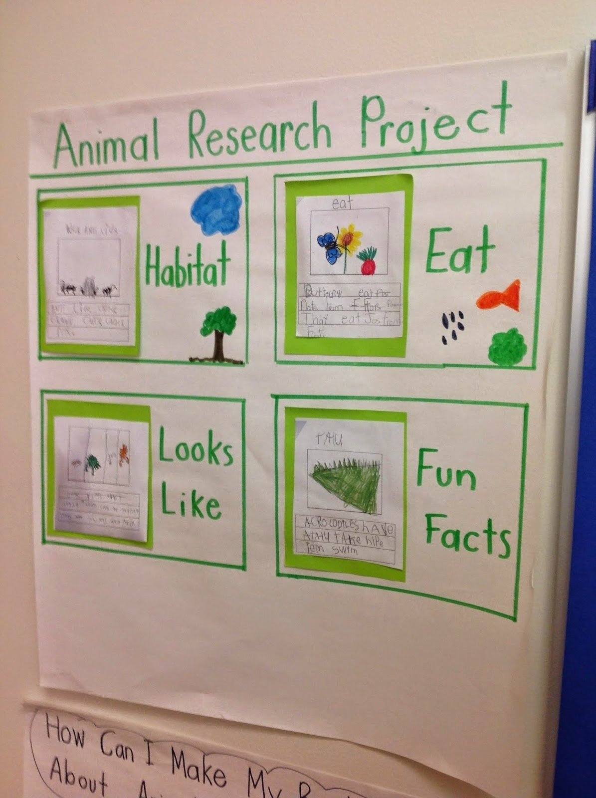 10 Fashionable Senior Project Ideas With Animals what would be a good senior project dealing with animals 1 2020