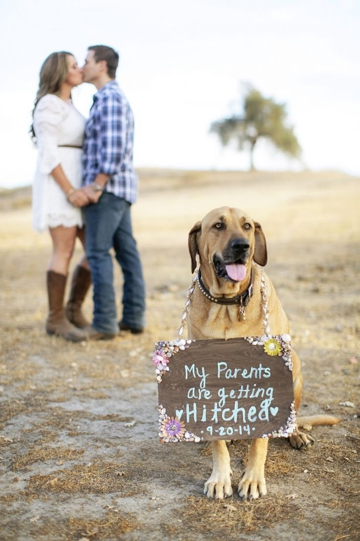 10 Nice Save The Date Ideas With Dogs when cute dogs tell you to save the date dog wedding and engagements 2020